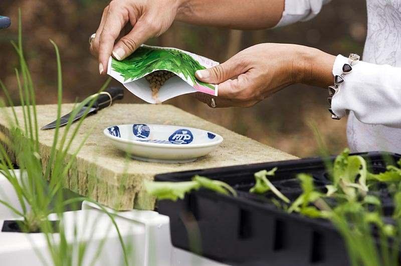 Saatgut ausstreuen in Schüssel