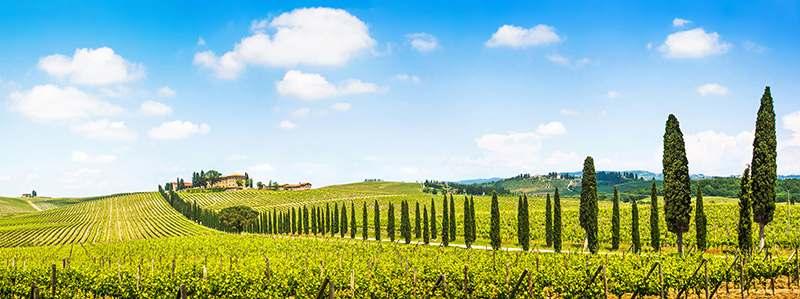 Toscana mit langer Baumreihe und Feldern
