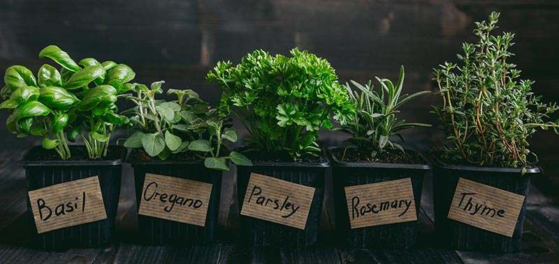 Fresh herbs on the wooden background with copy space.