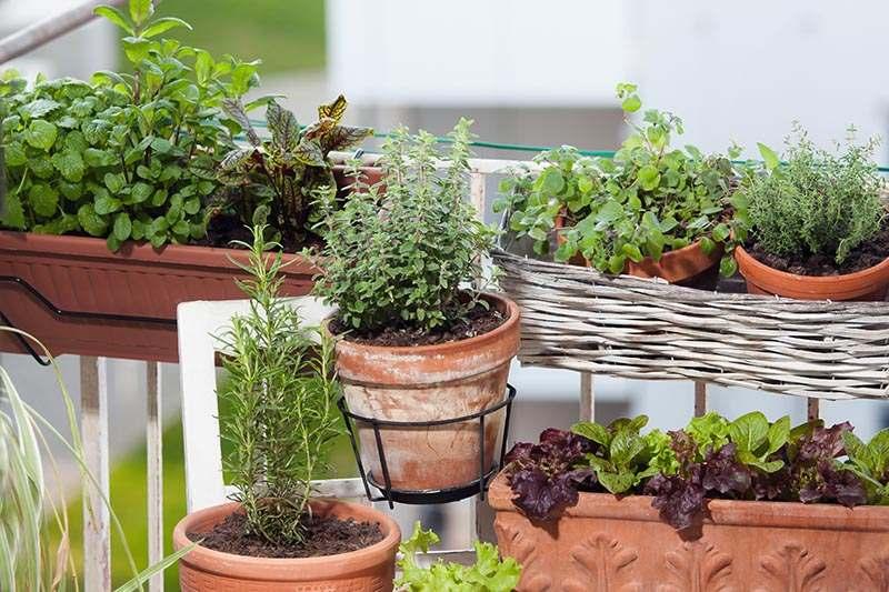Kräuter- und Gemüse am Balkon anpflanzen