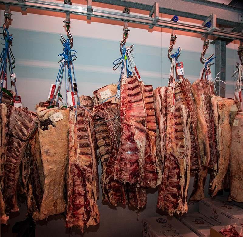 Fleisch Reifekammer