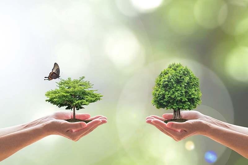 Nachhaltigkeit, 2 Bäume, die auf Händen getragen werden