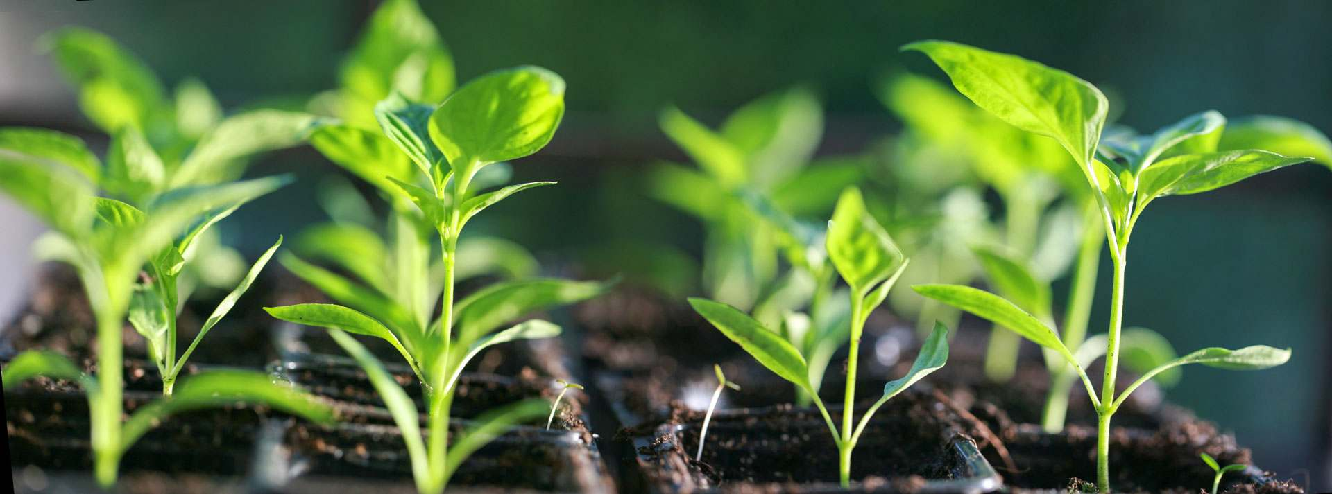 salat im haus vorziehen
