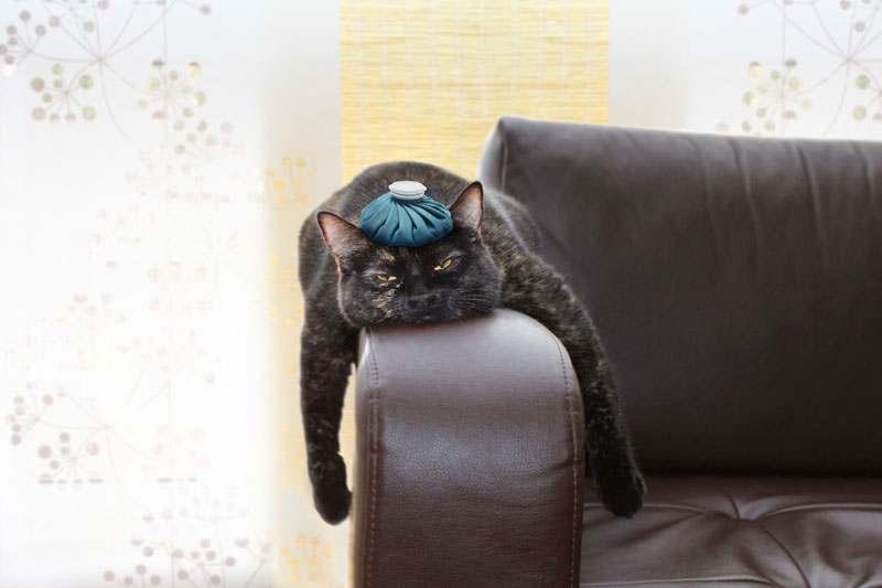 Kater mti eisbeutel auf dem Kopf liegt auf der Couchlehne und sieht müde aus