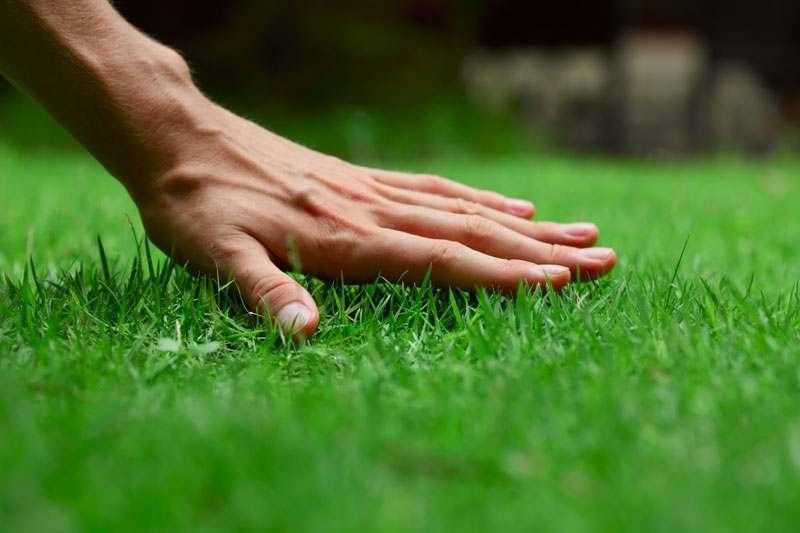 Hand über dem Rasen