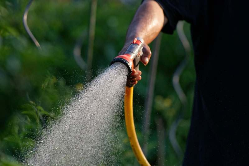 Den Garten abduschen, um Insekten zu entfernen