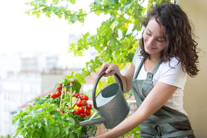 Balkonnutzpflanzen