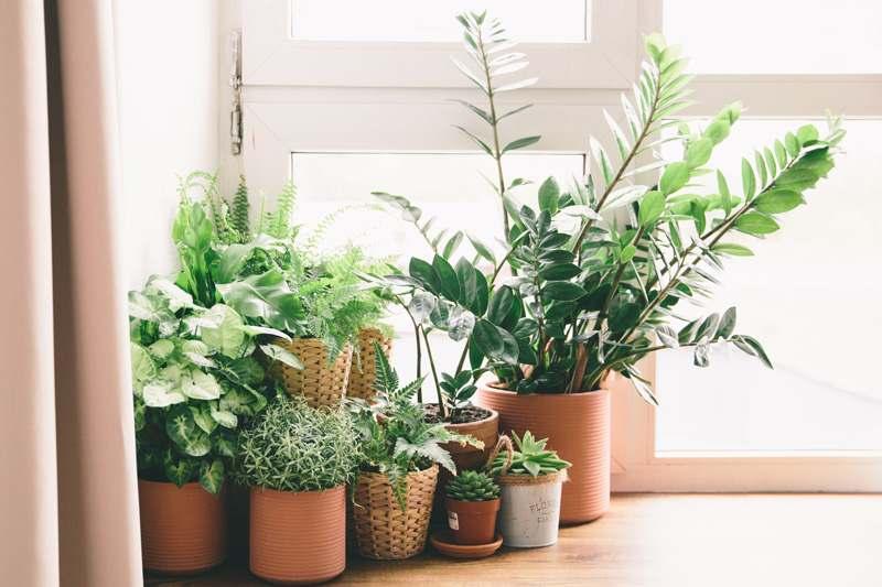 Pflanzen umtopfen Topfpflanzen Zimmerpflanzen